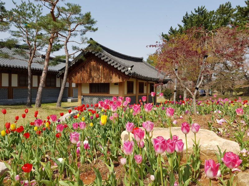 what to do in seoul in march