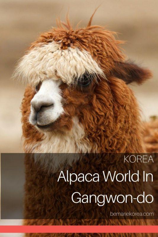alpaca farm korea