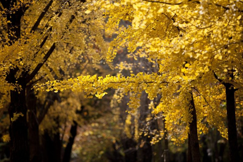 things to do in autumn in Seoul