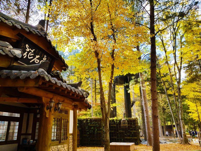 itinerary seoul 7 days