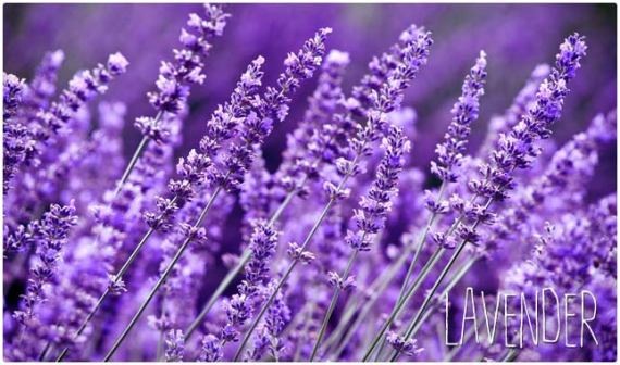 lavender anxiety remedy