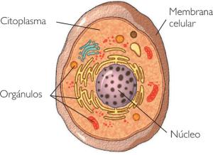 Ficha Informativa – A Célula (1)
