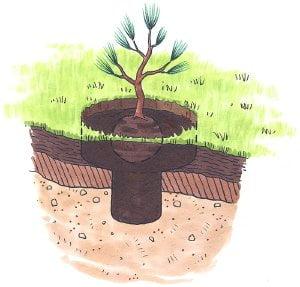 Ficha Informativa – A Formação do solo (1)