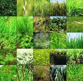 Teste Diagnóstico – Diversidade das Plantas (3) – Soluções
