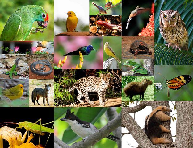 A Diversidade dos animais
