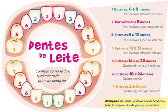 A dentição de leite e a dentição definitiva