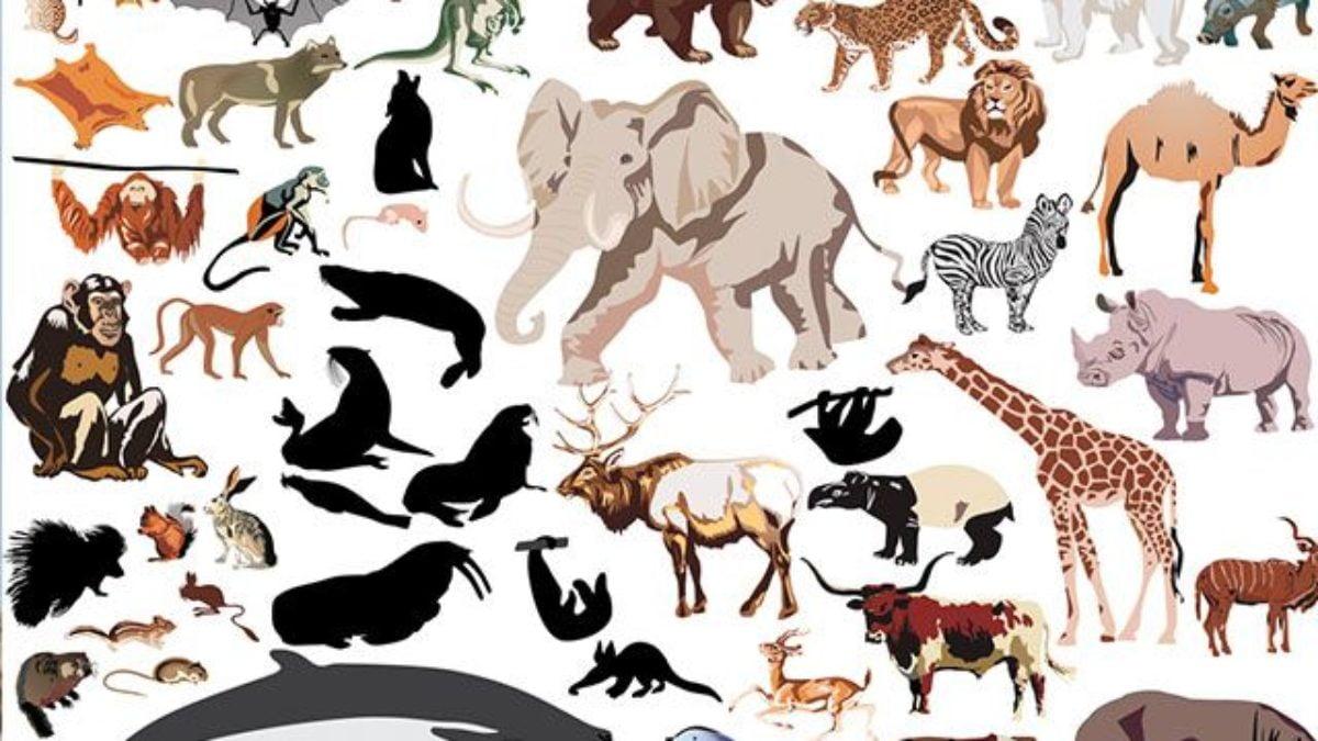 Ficha de Trabalho – Características e modos de vida de alguns animais (3)