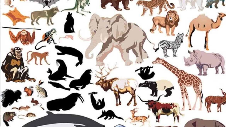 Características e modos de vida de alguns animais