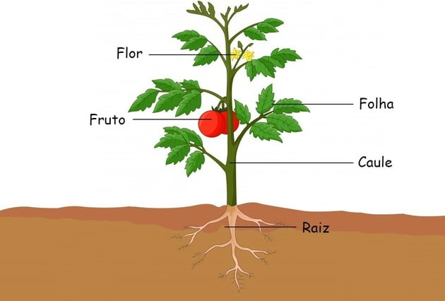 Partes que constituem a planta