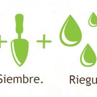 Pratos sustentáveis se transformam em plantas