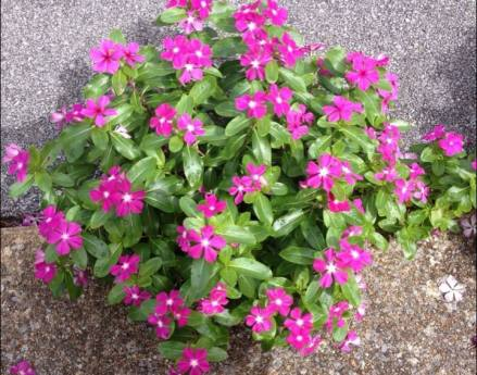 bloomwhereyoureplanted3