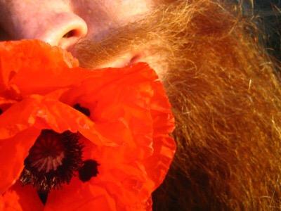 beard in bloom