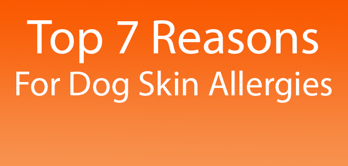 Top  Sources Of Skin Allergies In Dogs