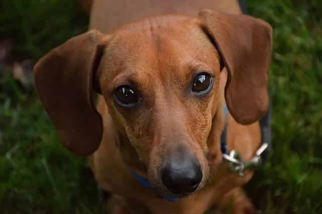 Liquid Benadryl For Dogs Heres What You Need To Know Benadryl