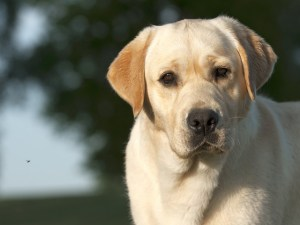 Are antihistamines safe for dogs