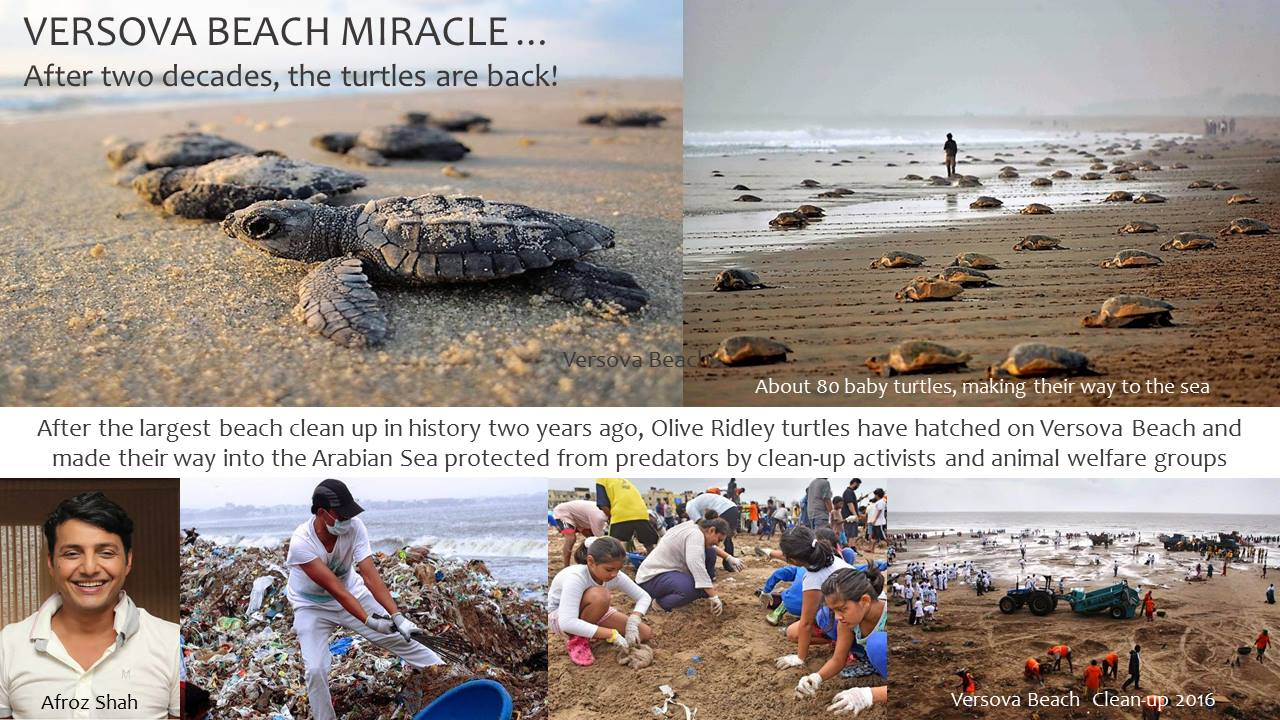 """How """"even"""" Beach Cleanups make A difference"""