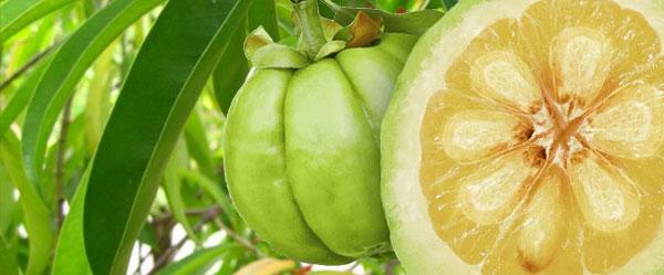 Cómo la garcinia cambogia nos puede ayudar a perder peso