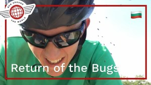 Return of the Bugs
