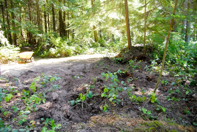 All of this forest floor detritus will have to come off to get down to bear earth.