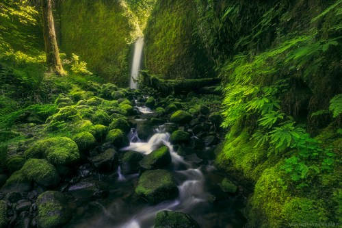 Mossy Grotto Falls is resplendent in its spring greens.