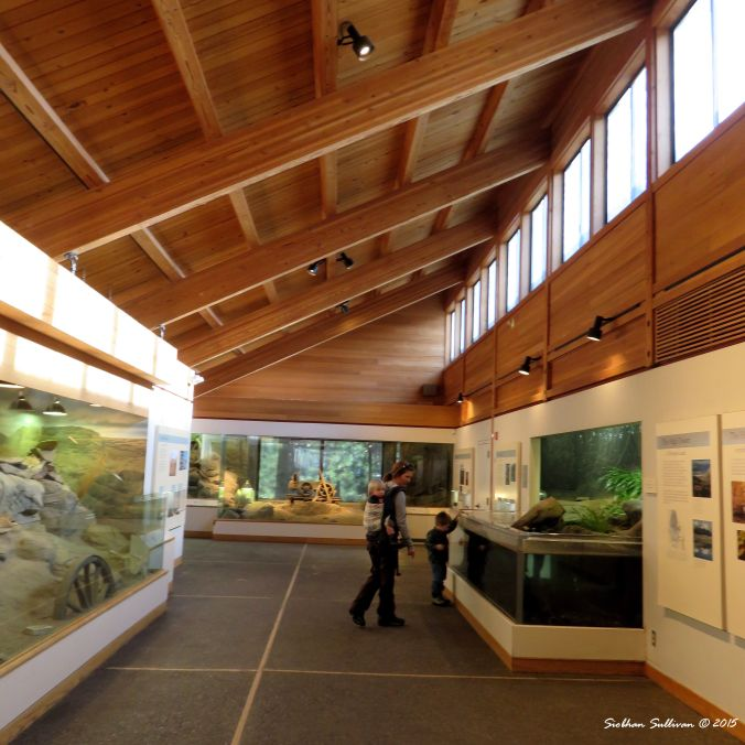 High Desert Museum Desertarium