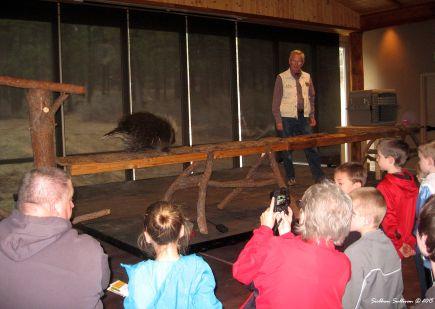 Porcupine talk