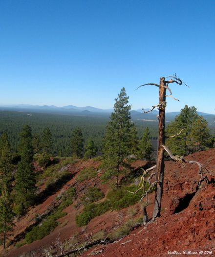 View from the top of Lava Butte