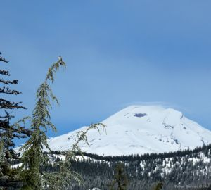 South Sister with Gray Jay