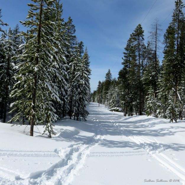 Snowshoe and ski tracks at Ten Mile Sno-Park