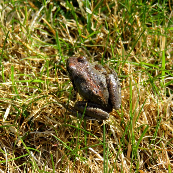 Treefrog in the grass