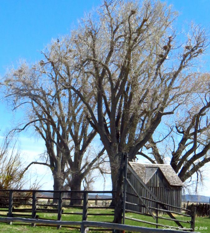 Sod House Ranch, Malheur NWR 4-2016