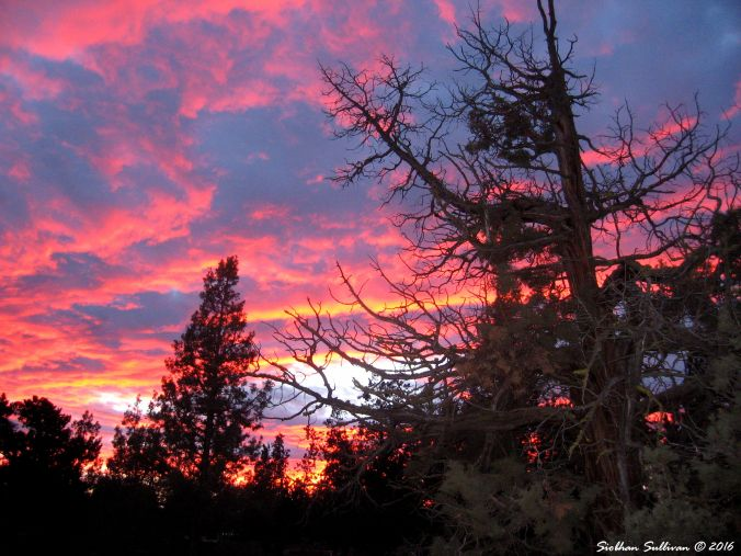 Juniper sunrise 2Feb2015
