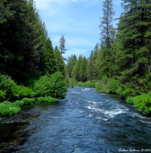 Metolius River, Oregon