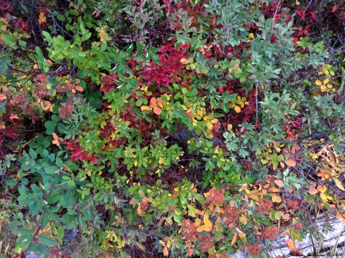 Fall foliage at Doris Lake, Oregon 20Sept2016