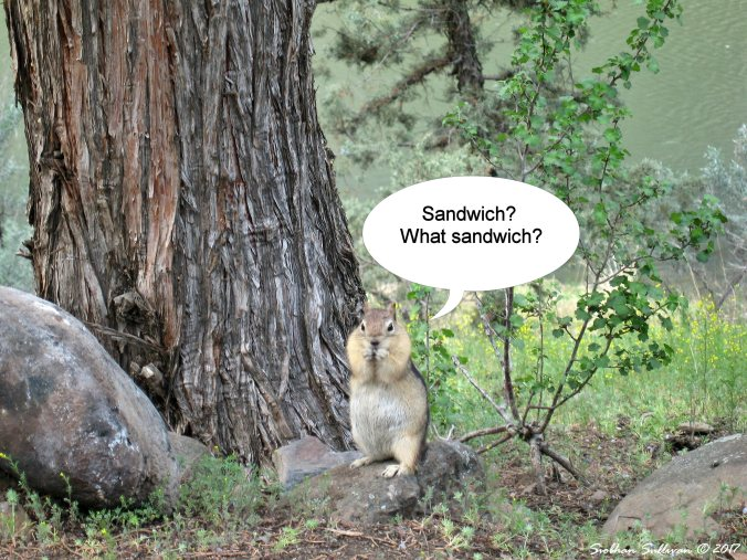Photo bloopers 2. Ground squirrel 9April2015