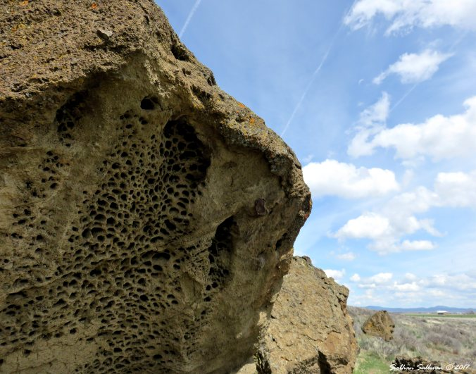 Holey rocks at Fort Rock, Oregon 22 Apr2017