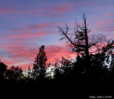 Juniper sunset in Bend, Oregon 10March2016