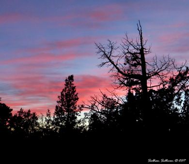 Juniper sunset in Bend, Oregon 10March2016
