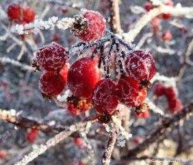 December Frost 2 10December2017