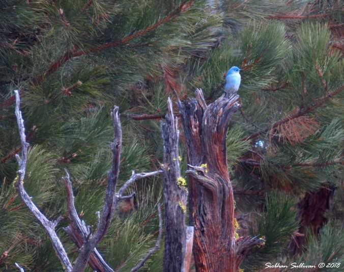 A bluebird day in Bend, Oregon 13March2018