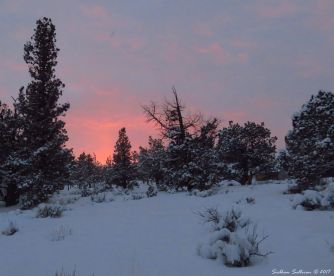 Many moods of my muse - Juniper Sunset 4January2017