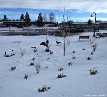 """River Geese"" by Peter Helze Mill A Loop Deschutes River Trail Art3 2March2018"