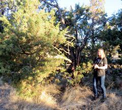 Siobhan Sullivan in her natural habitat 1July2018