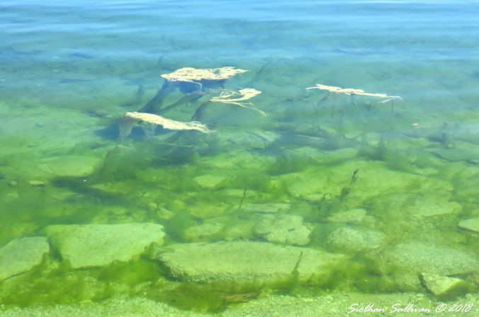 Patterns in water Floating Green Worlds 2June2018