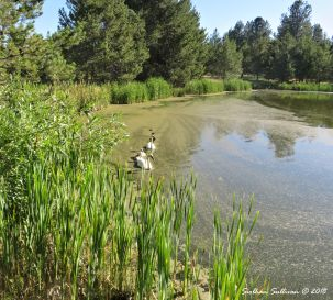 Visiting Sunriver Nature Center, Sunriver, Oregon