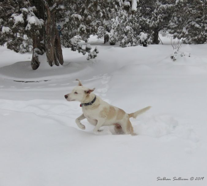 Snow Dog2 24February2019