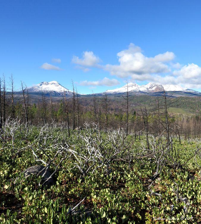 Burned forest near the Sisters, Oregon 2September2015