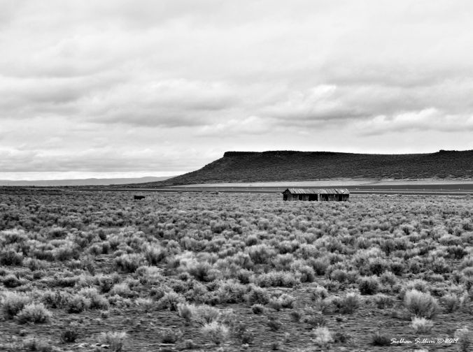 Out on the Range in Harney County, Oregon 13April2019