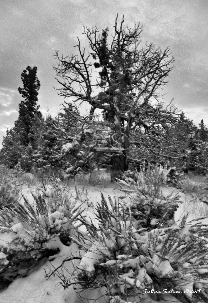 Snow in the sage near Bend, Oregon 30November2019