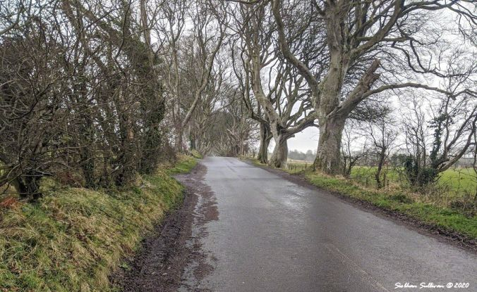 The Dark Hedges, County Antrim, Northern Ireland 28 February 2020